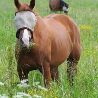 Quarter Horse Mare SOLD!!!