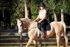 Palomino horse for Adoption